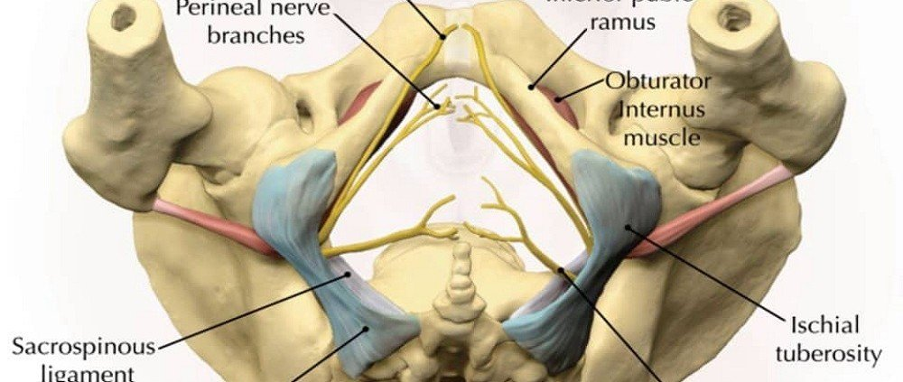 Pudendal Nerve Block